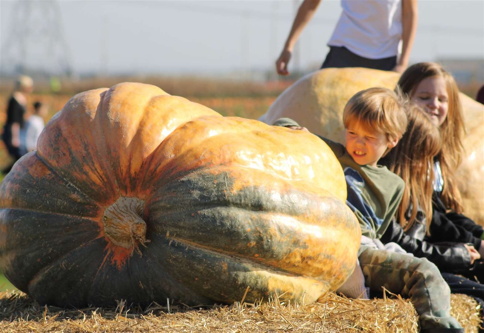 Join the great pumpkin challenge