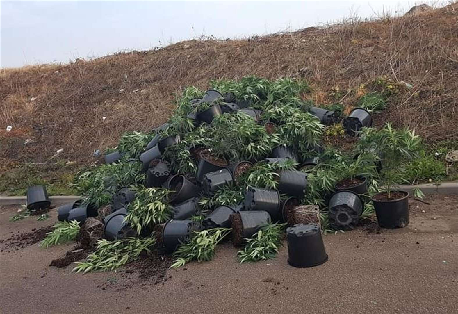 Pile of pot abandoned on industrial estate