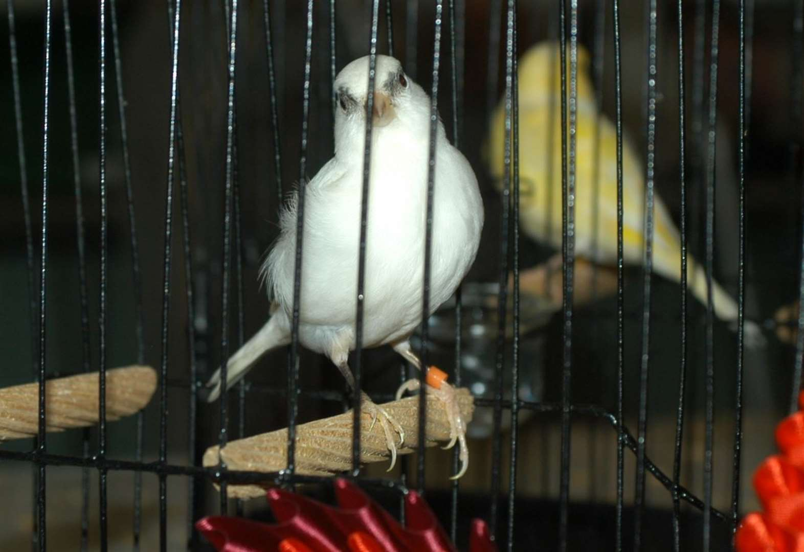 Owner spitting feathers after theft of 40 birds