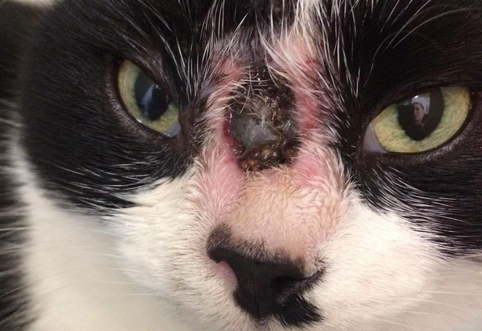 Cat shot in face with catapult