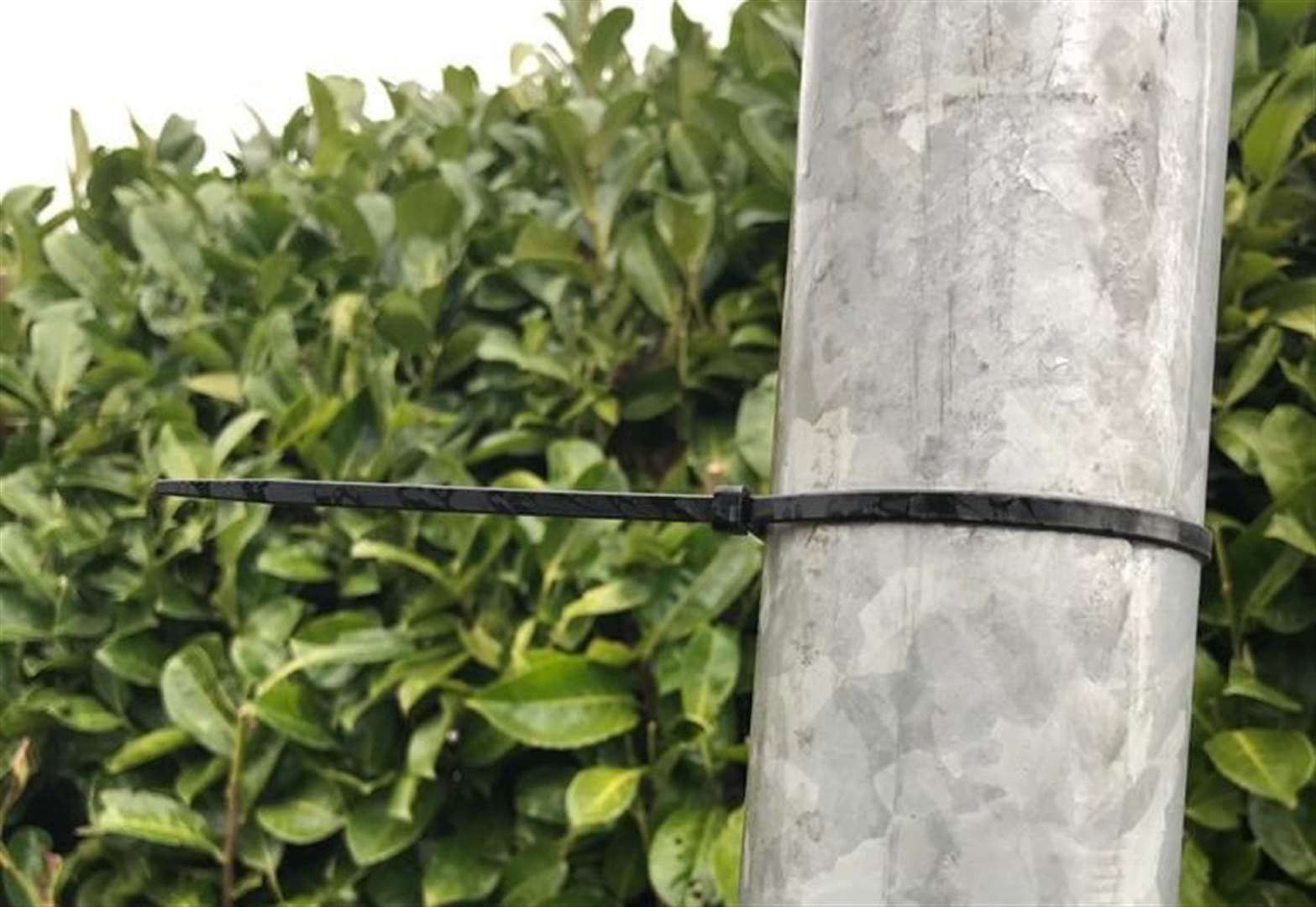 'No proof' cable tie theory is linked to dog thefts