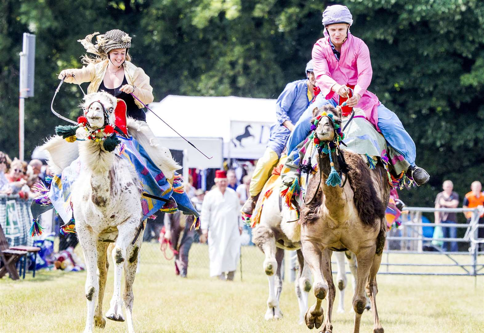 Camels set to race in to the county show