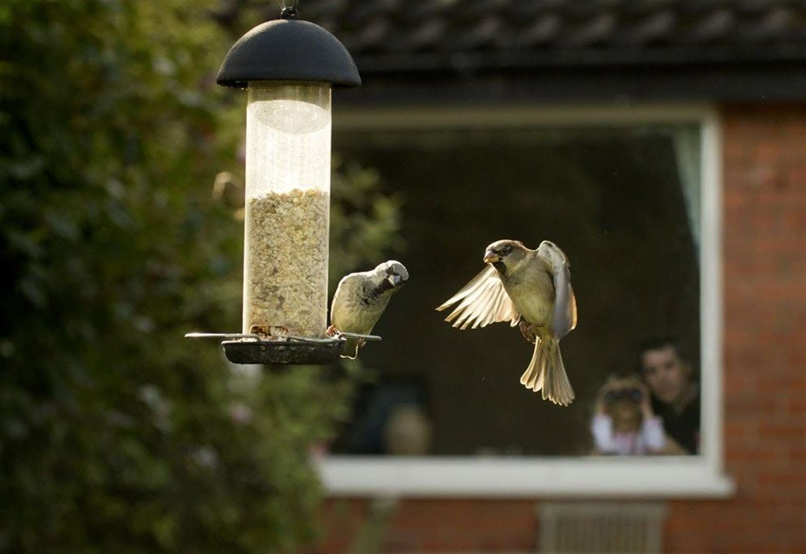 Record numbers join Big Garden Birdwatch