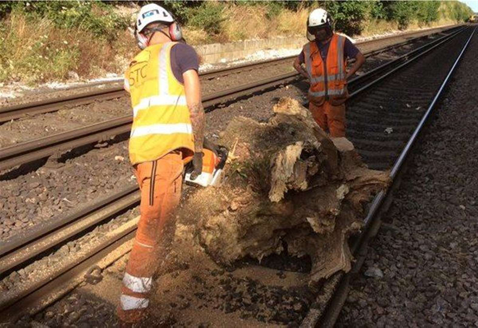 Railway line re-opens after train hits tree