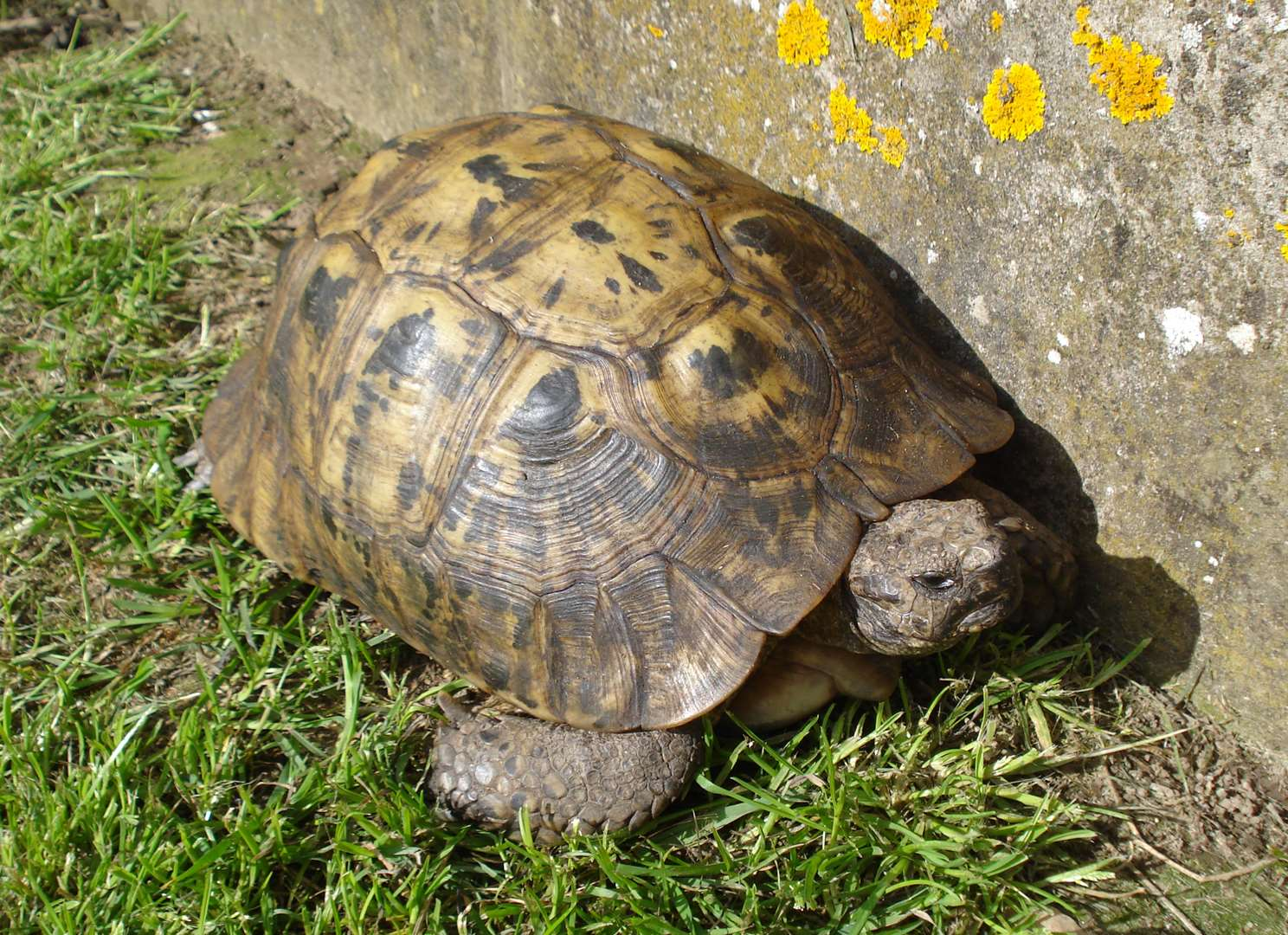 Appeal to find pet tortoise