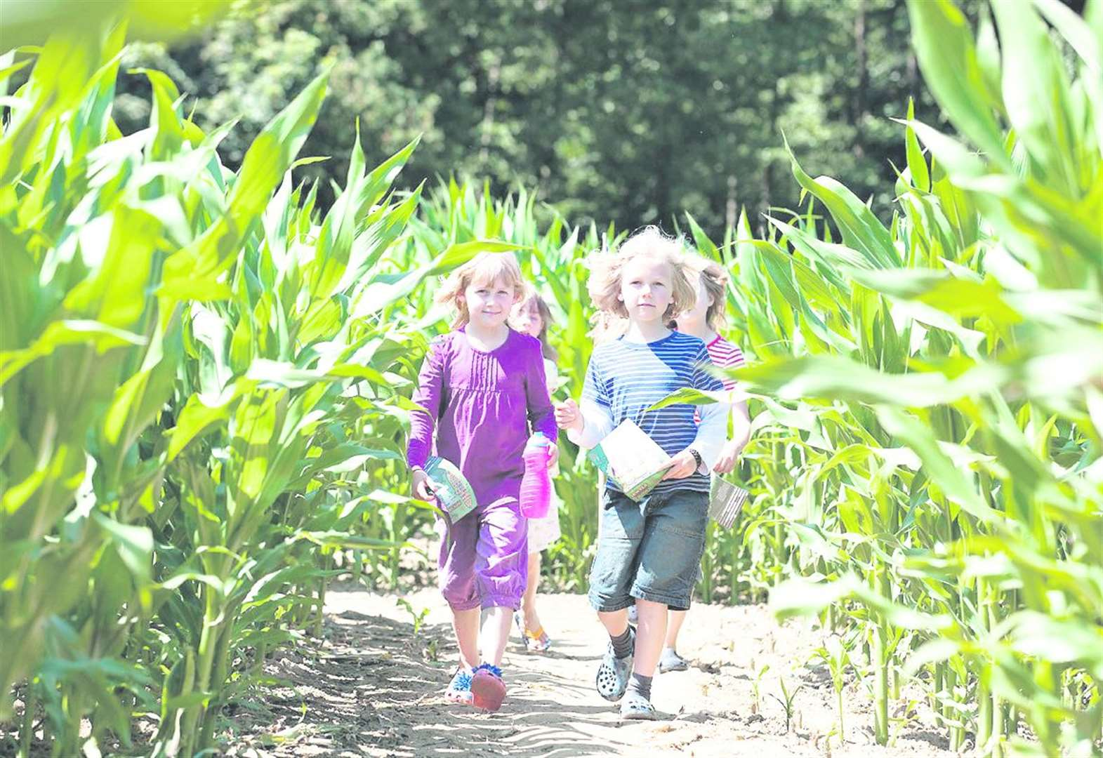 A Maize Maze moment to savour