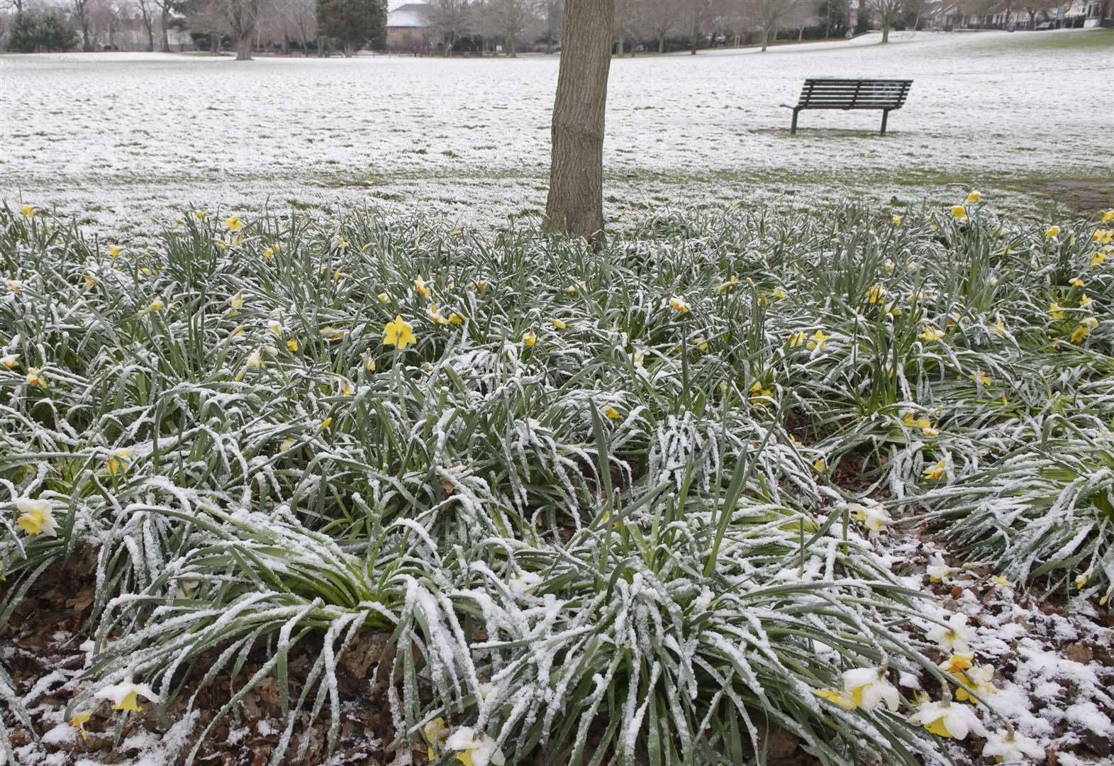 Light dusting of snow expected