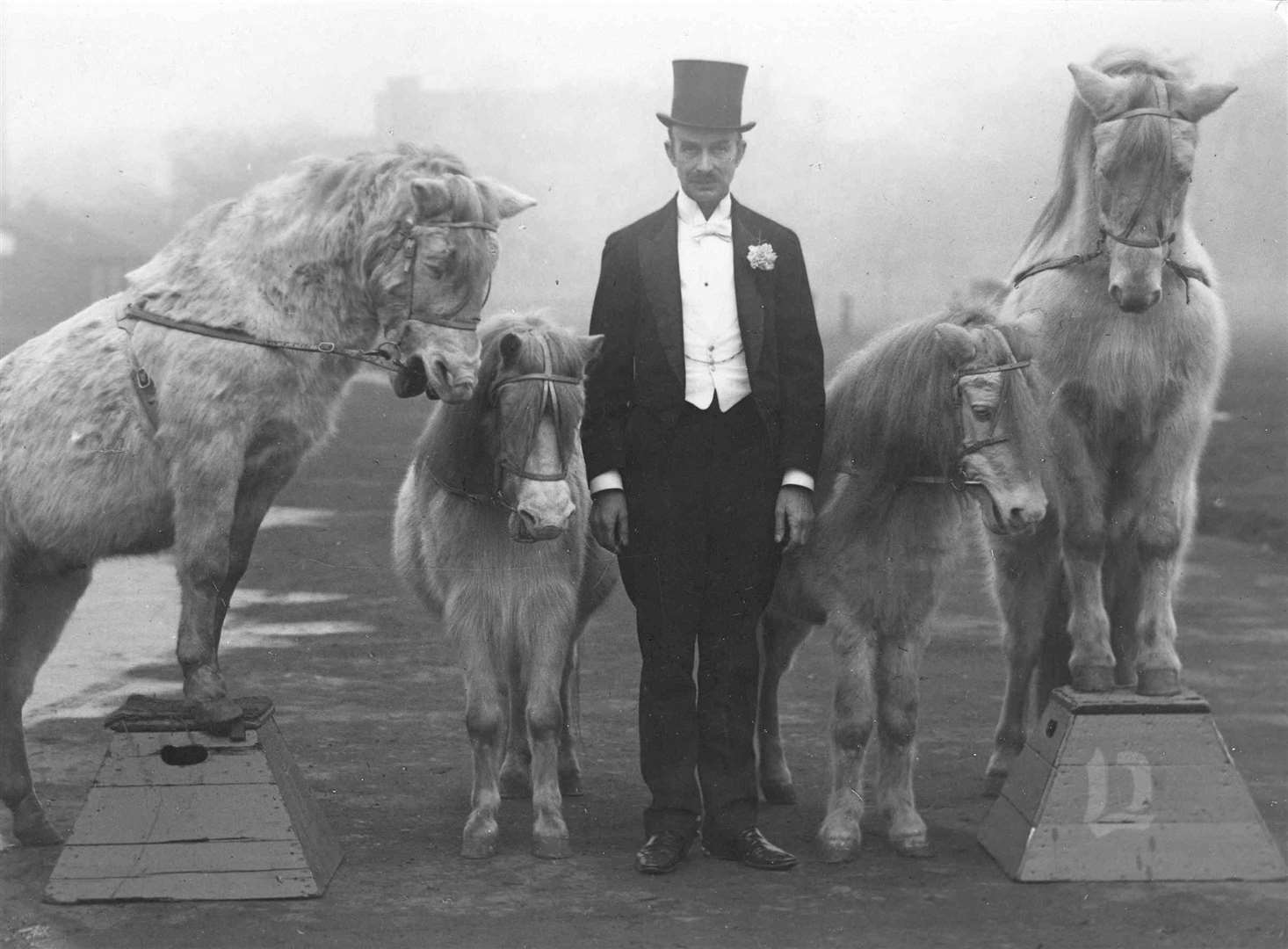 Sir Garrard with his famous Royal Cream Ponies