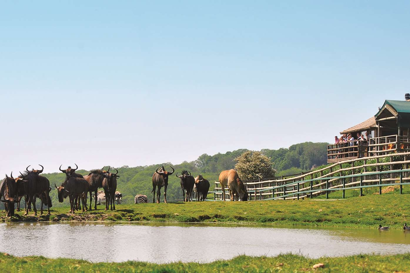 One of the watering holes at Port Lympne.