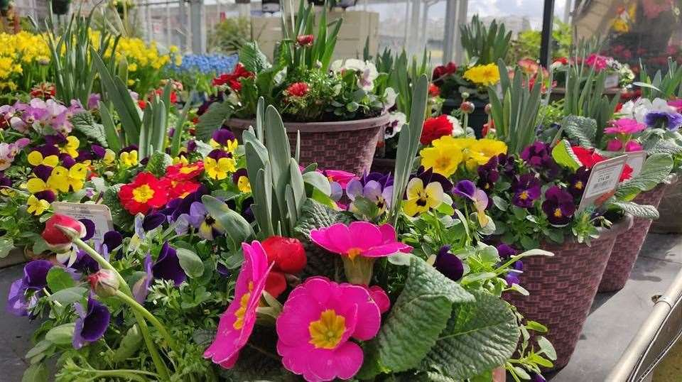 Coolings is an award winning, independent, garden centre group in Kent with three centres - two based in Knockholt and the Potted Garden in Bearsted.