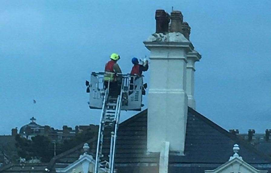 Firefighters used height ladders to reach the seagull. Picture credit: Danny Pope