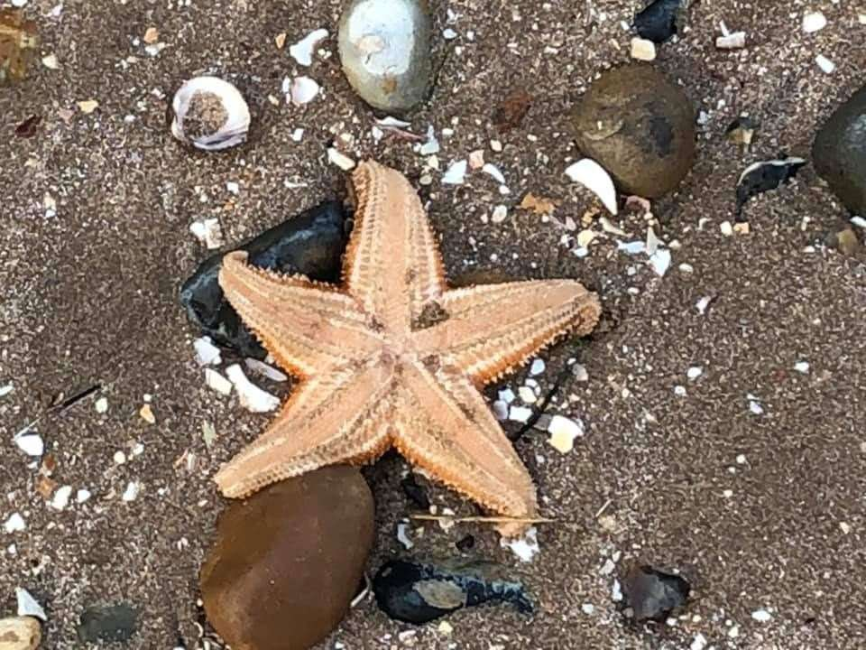 Starfish washed up on the beach at Leysdown. Picture: Terry Hanlon (8197748)