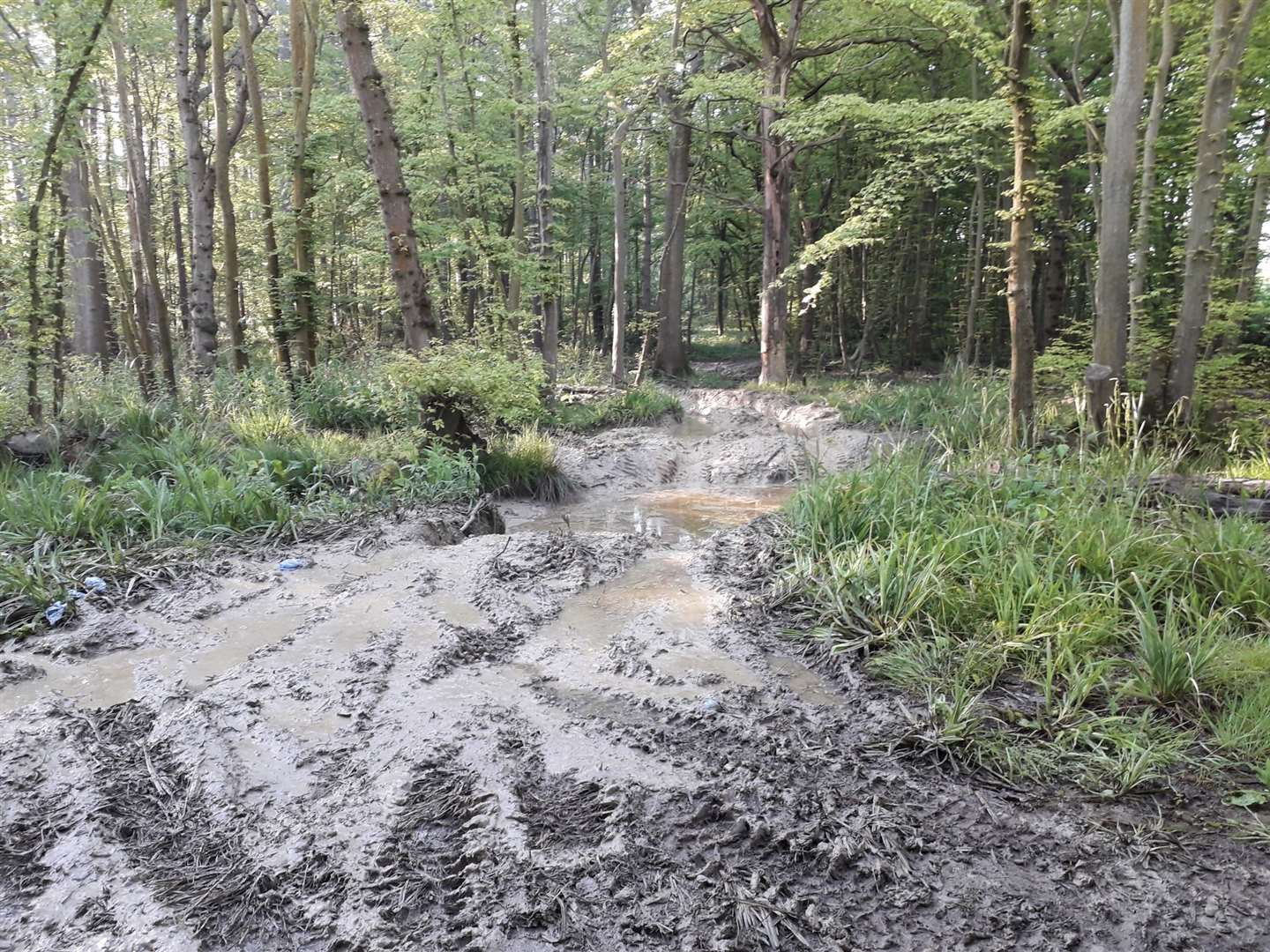 Vehicles driving through Hamstreet's woodland have caused damaged to the track