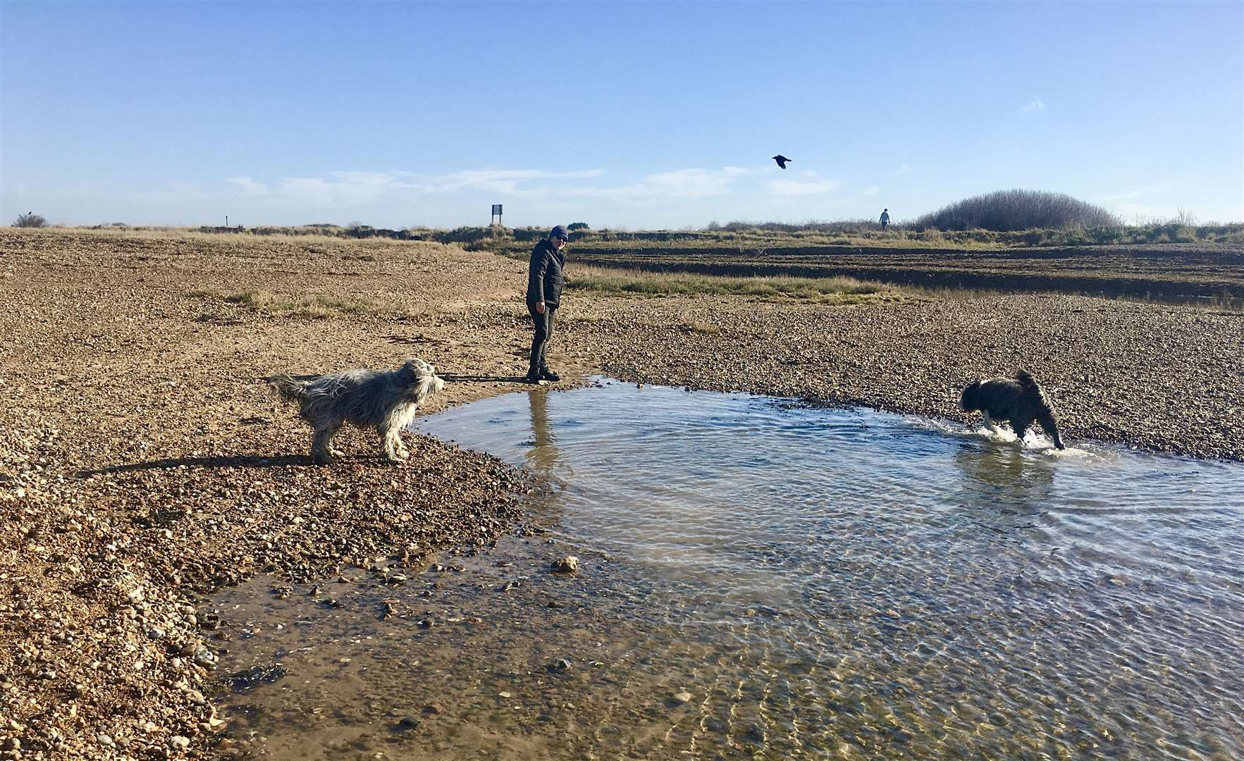 A dog-walker at Long Rock with his bearded collies. Picture: Andrew McGuinness
