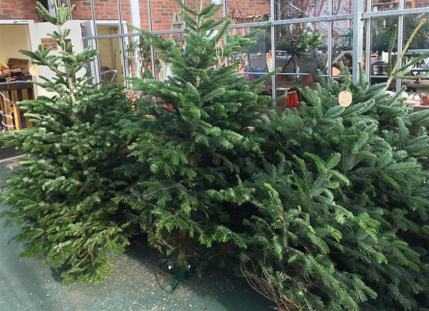 The garden centre has stopped selling its Christmas trees in plastic netting (5800031)