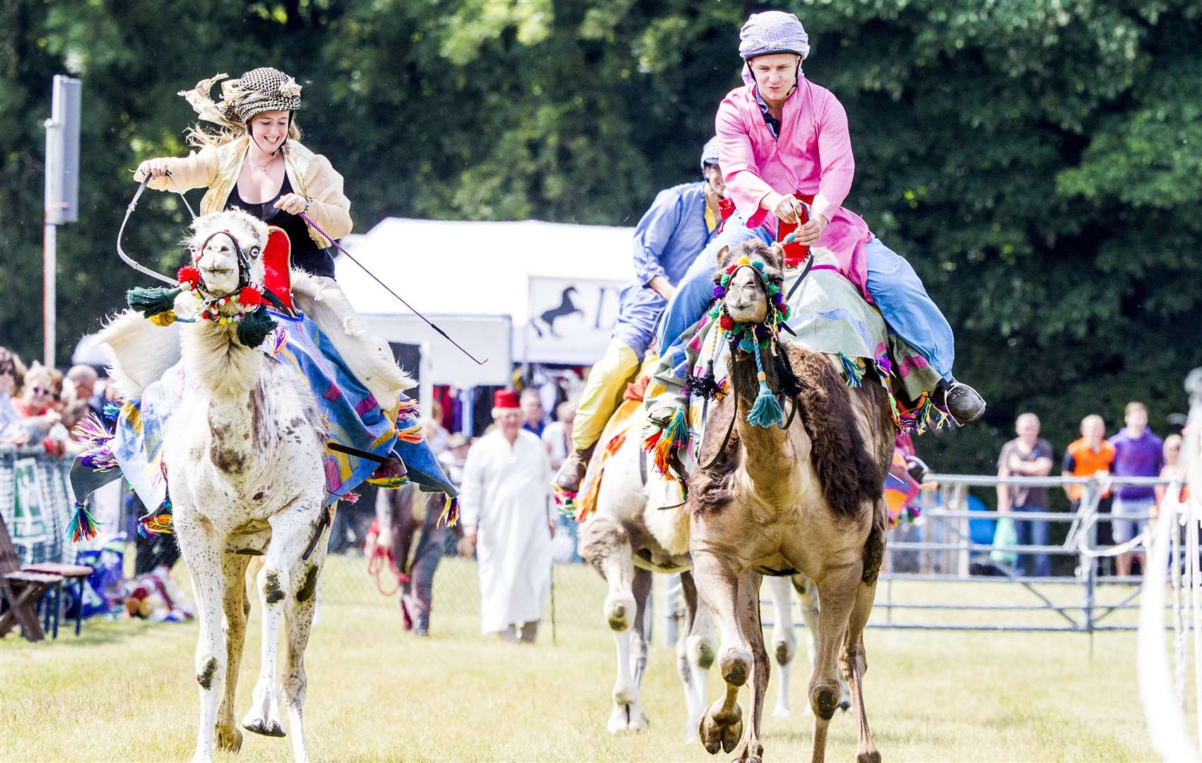 Racing camels will be at the Kent County Show