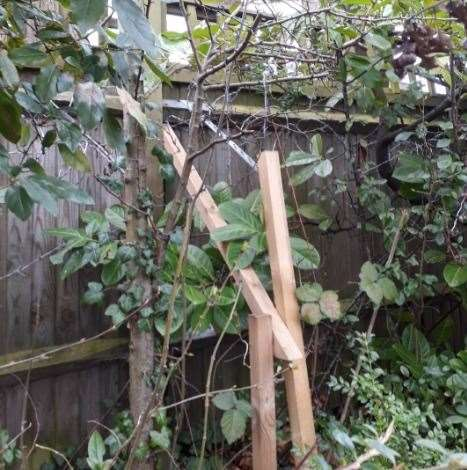 Wooden posts have been fixed in place to prevent damage to fence posts cause by the roots of the trees.