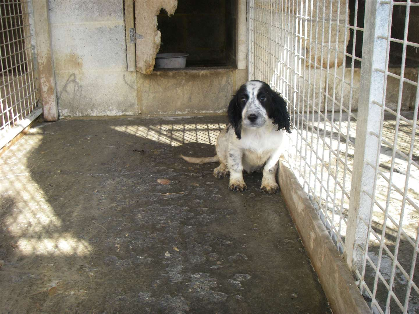 Many animals were stored in small cages without beds or toys. Picture: RSPCA (15157828)