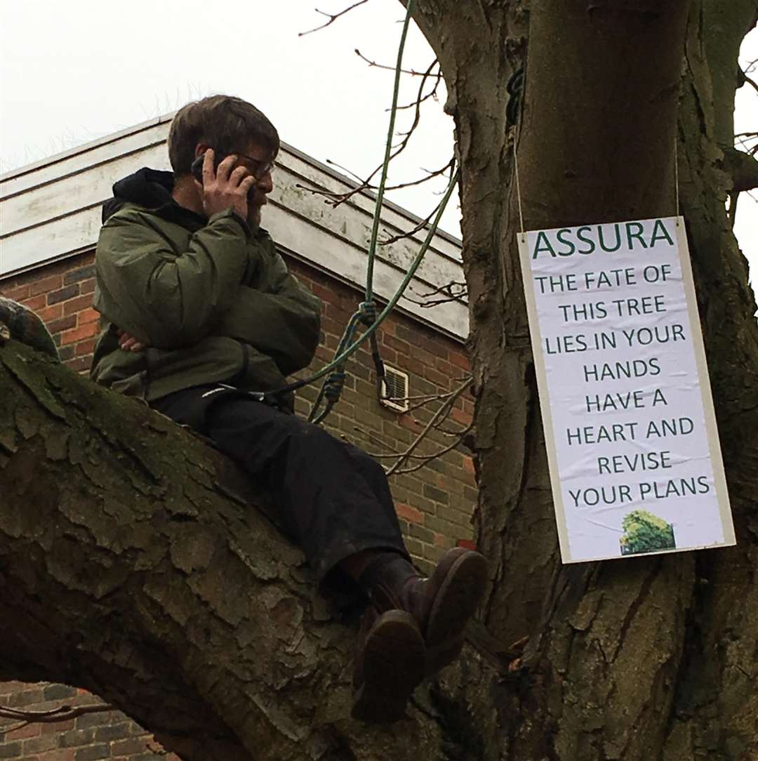 Protester Mark Hood in a tree he is trying to save in River Lawn Road in Tonbridge