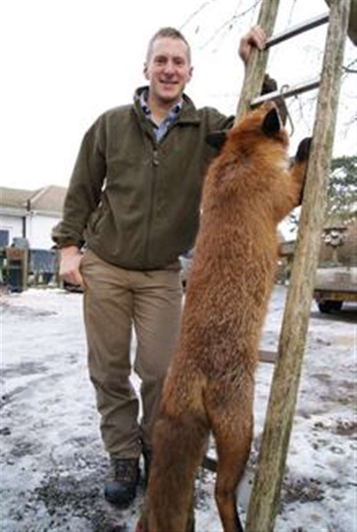 giant fox killed in maidstone
