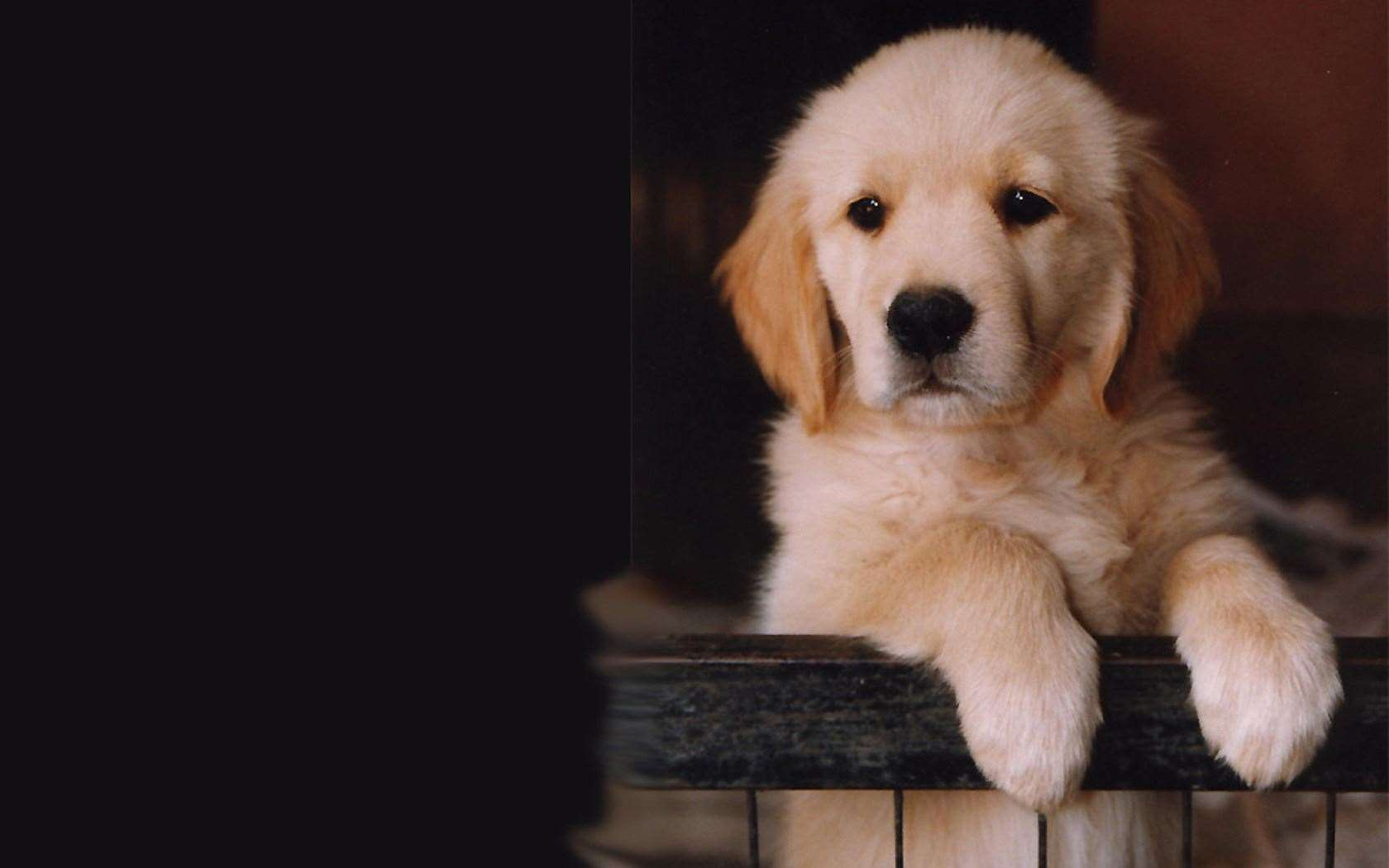 If a puppy carries excess weight, it can impact their bones as they grow. Stock image