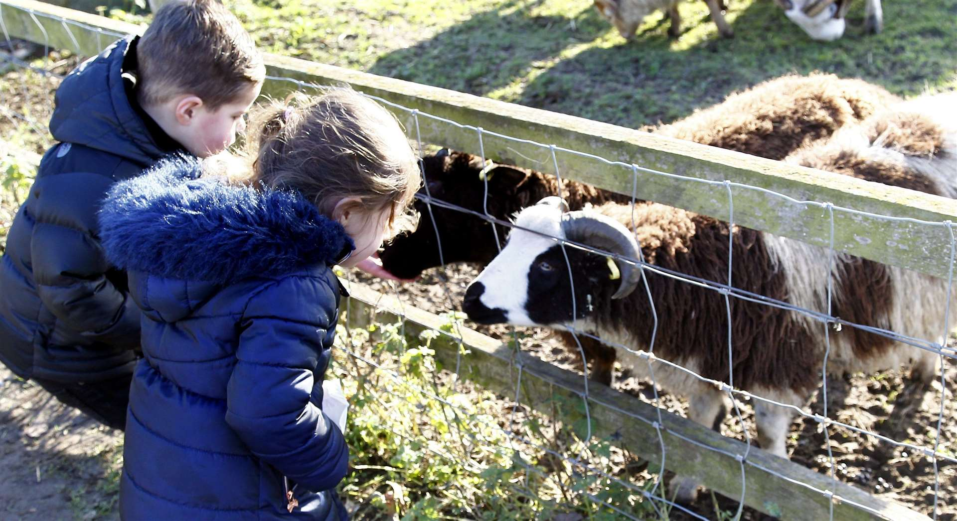 Finley and Miller meet the goats at Kent Life Picture: Sean Aidan