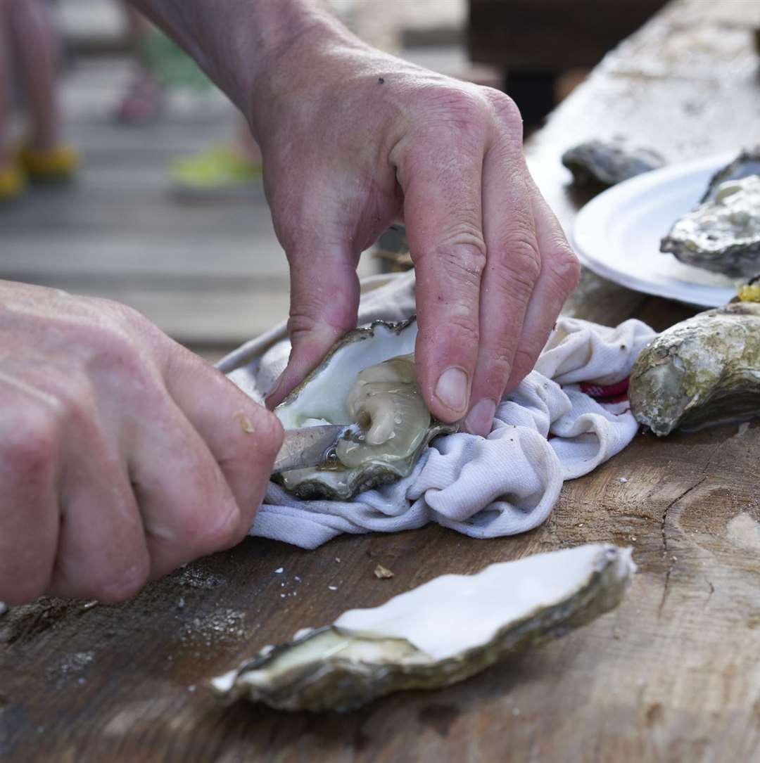 Oyster shucking in Whitstable Bay