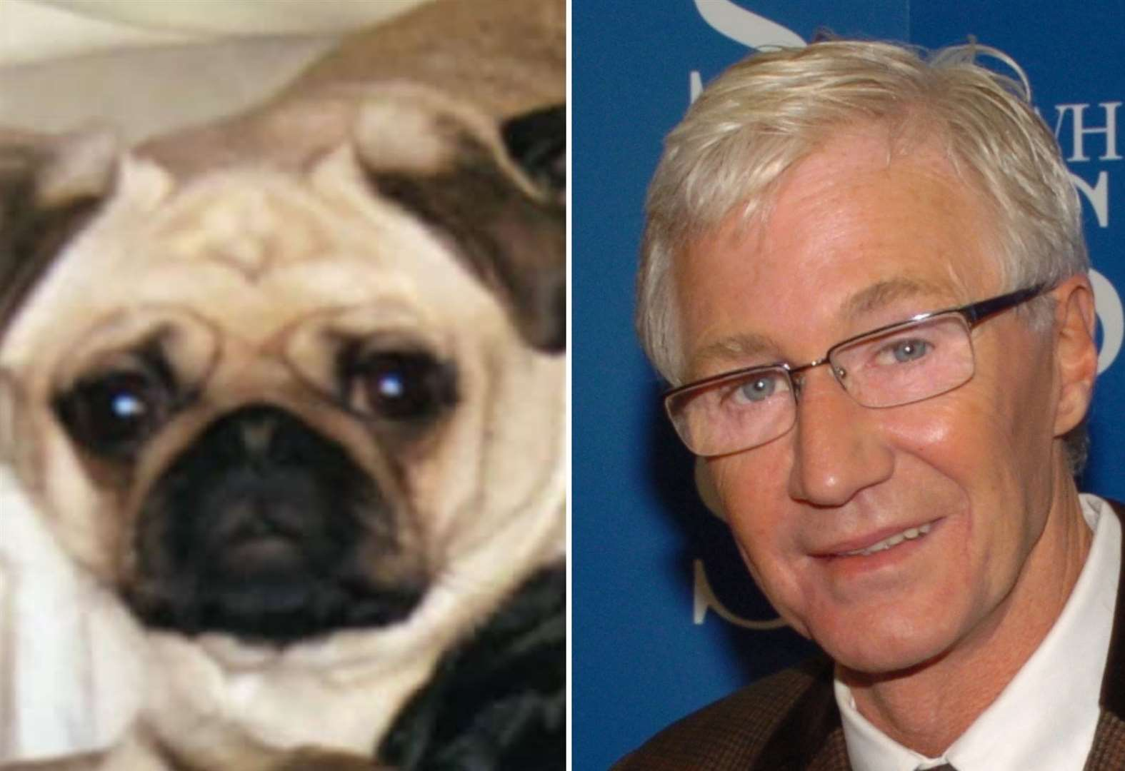 Paul O'Grady shares outrage over Lydd pug theft and warns <b>Instagram</b> followers not to walk pets ... thumbnail