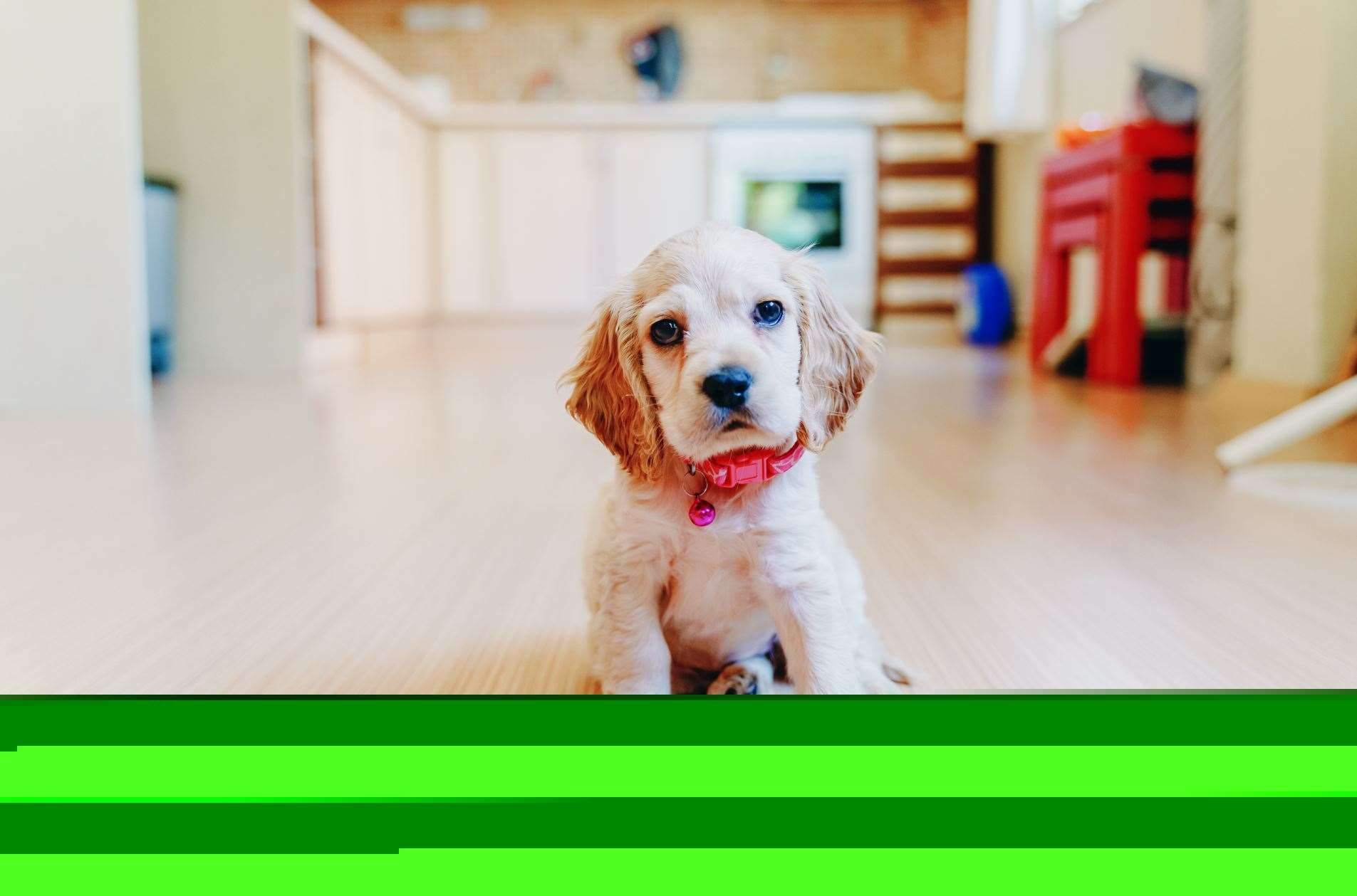 Changes in people's lifestyles over the past 18 months have encouraged more households to buy pets