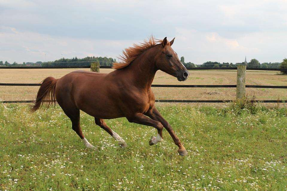 A horse galloping. Stock image