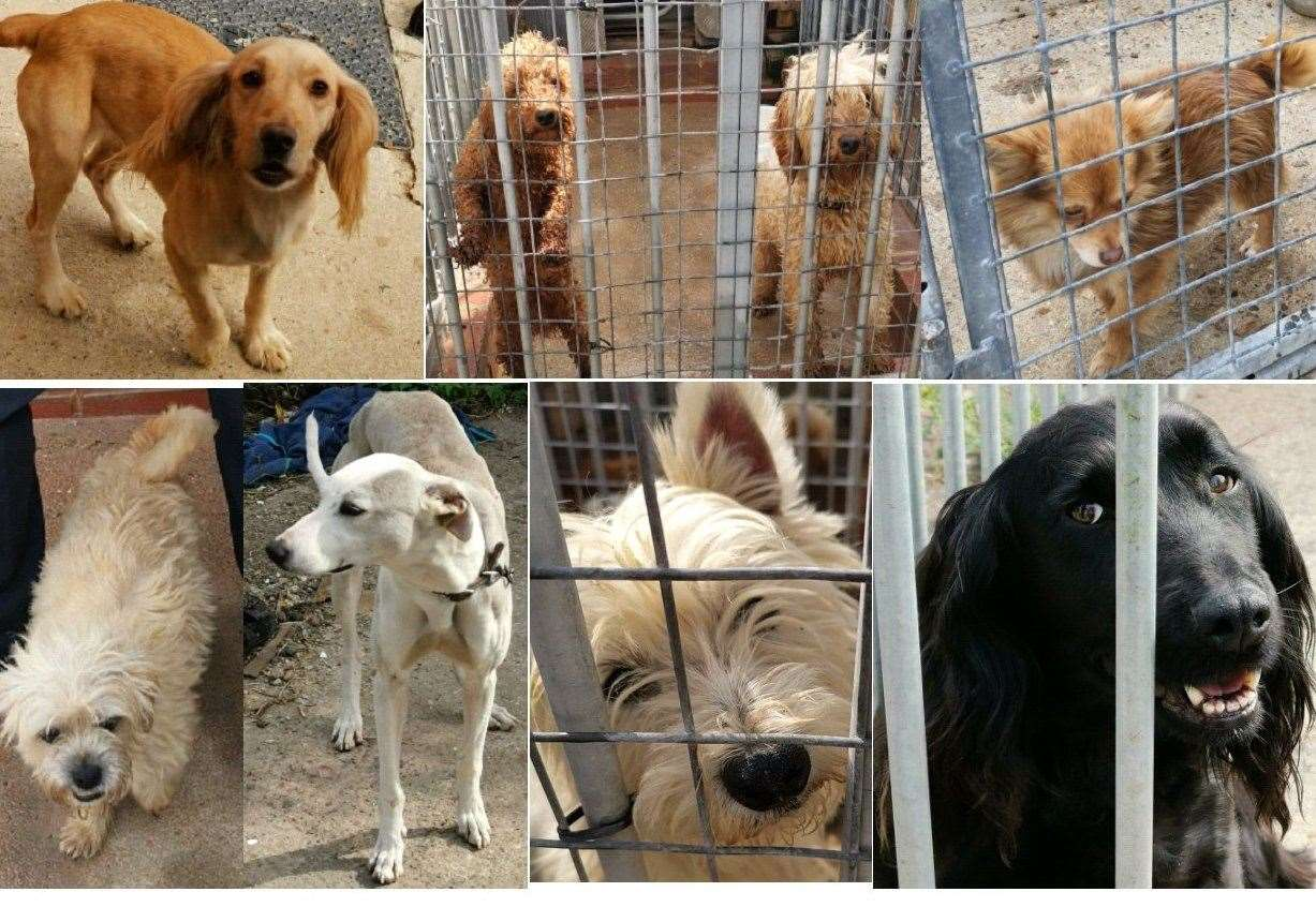 A number of stolen dogs were recovered last month following a police raid