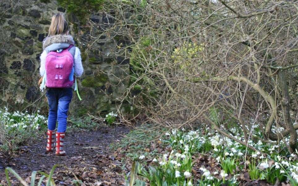 Snowdrops will be coming up soon at Great Comp Garden, though you'll only be able to see them virtually