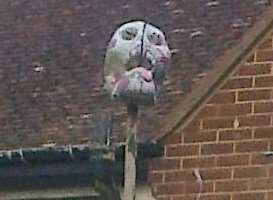 A skull Margaret Bills claims one of her neighbour's put up