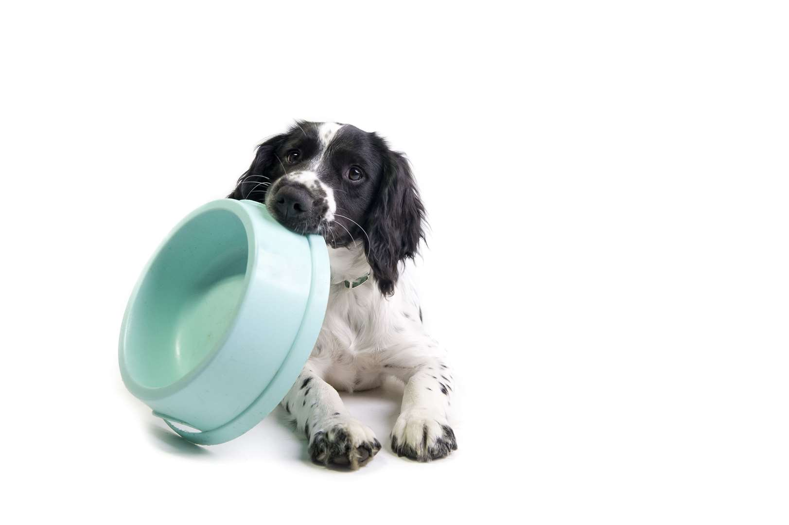 Some dog breeds are typically more prone to being overweight than others