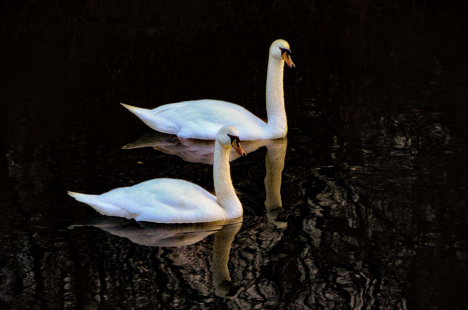 Lara Russell had her camera to hand as these two swans swam gracefully past along the River Stour