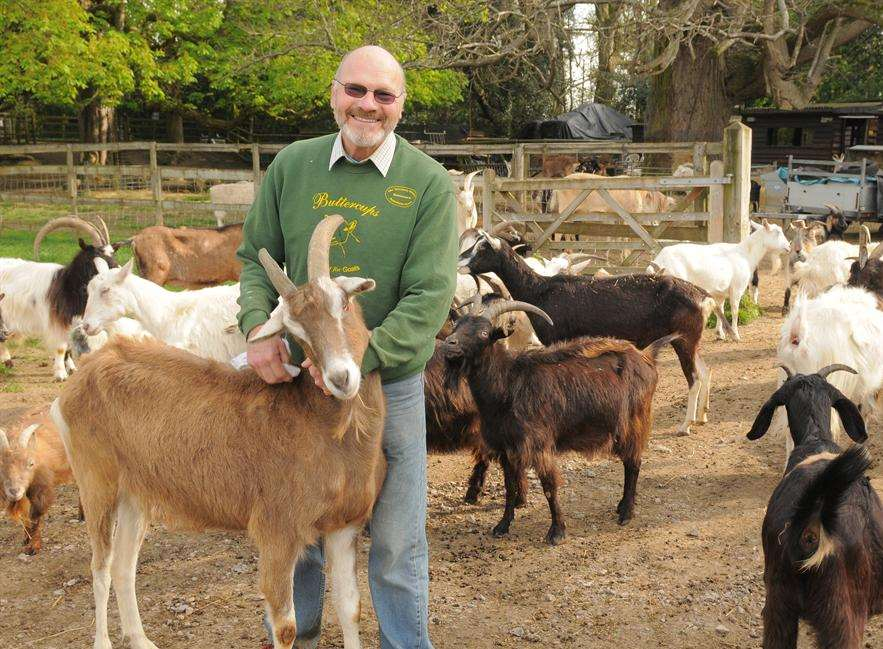 Bob Hitch with some of the goats at Buttercups Goat Sanctuary in Boughton Monchelsea