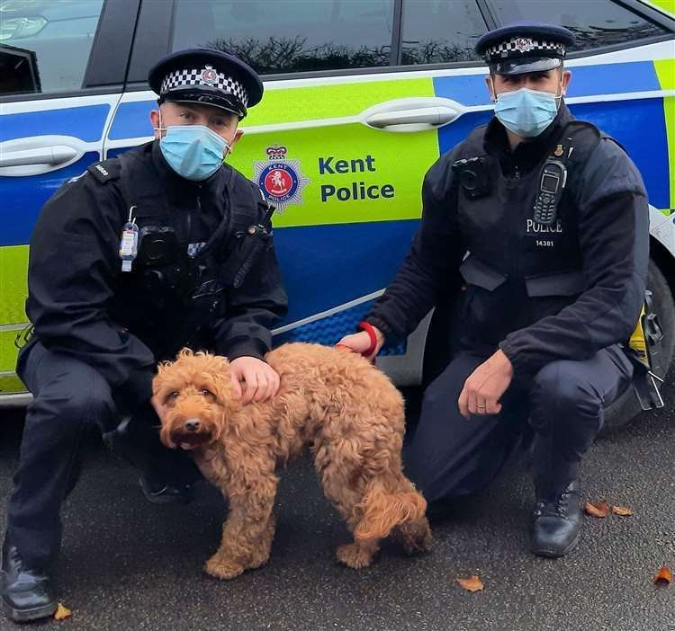 Officers found a microchip, enabling them to locate Pippa's rightful owners. Picture: Kent Police