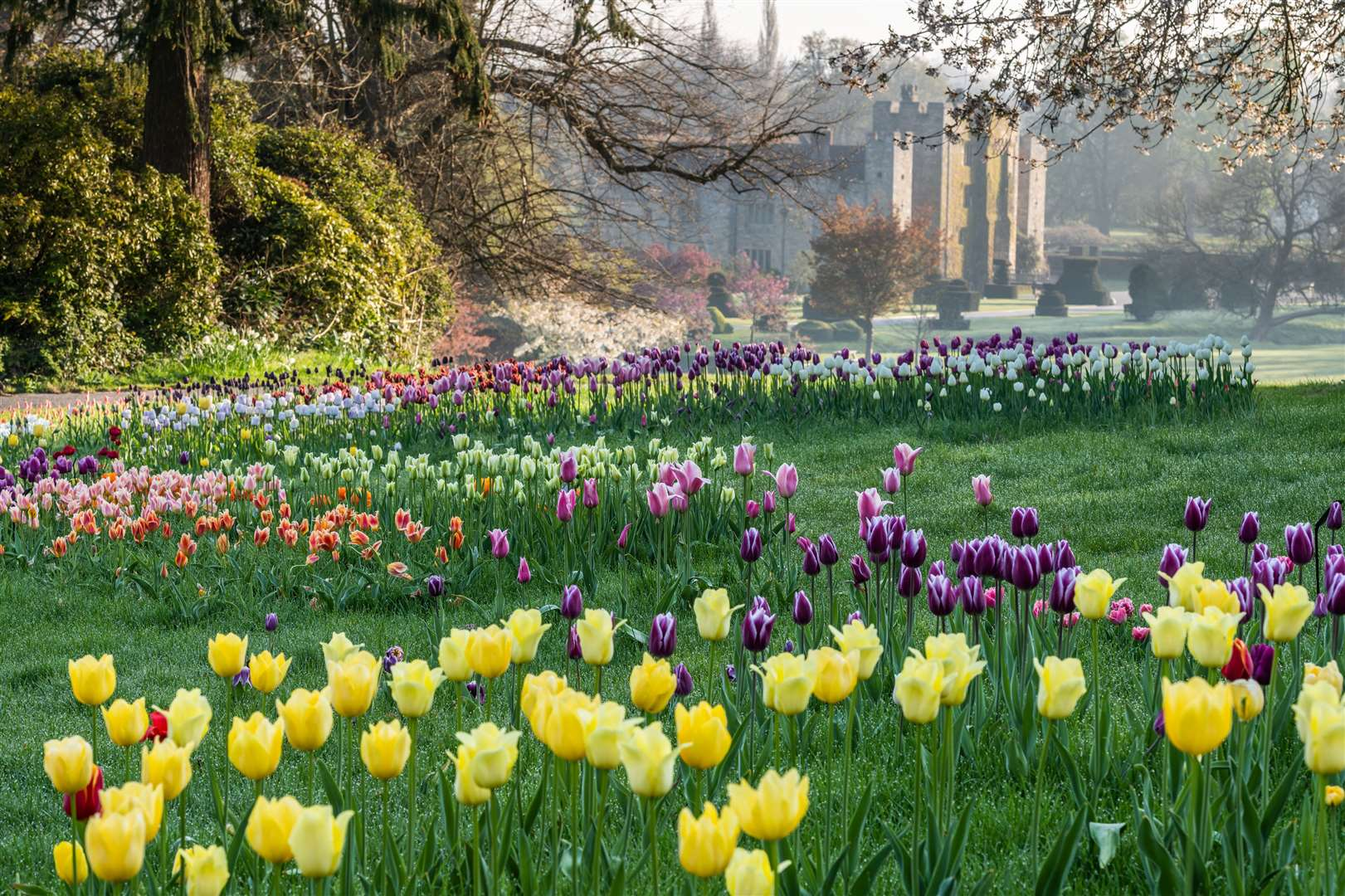 Drifts of tulips at Hever Castle Picture: Hever Castle & Gardens