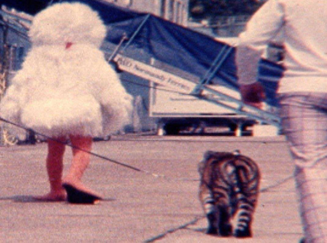 A live young tiger and the mascot Sid the Seagull with the new Dover ferry in 1978, The Tiger. Picture: Dover Film Society