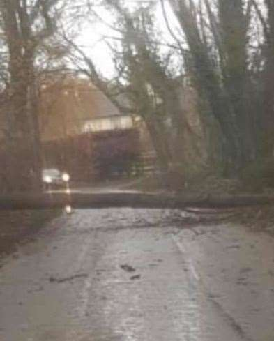 The fallen tree in West Street, Hunton. Picture by Emily Watts