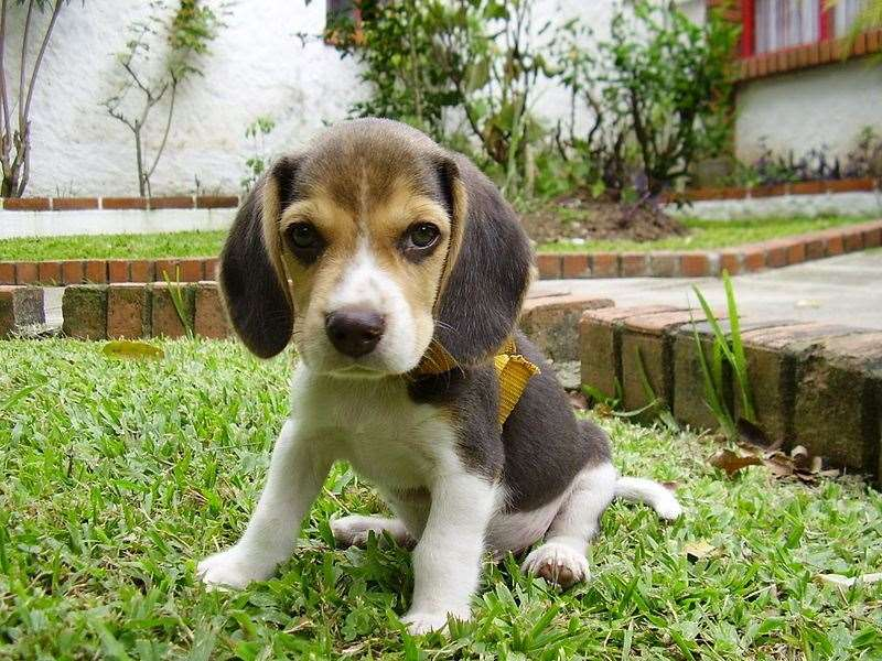 Prospective owners should, experts say, complete all appropriate checks before agreeing to purchase a puppy.