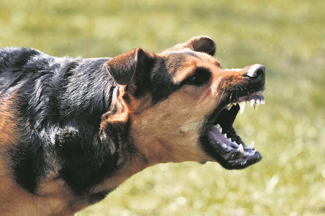 Police recorded more than 700 offences involving dangerous dogs. Stock image