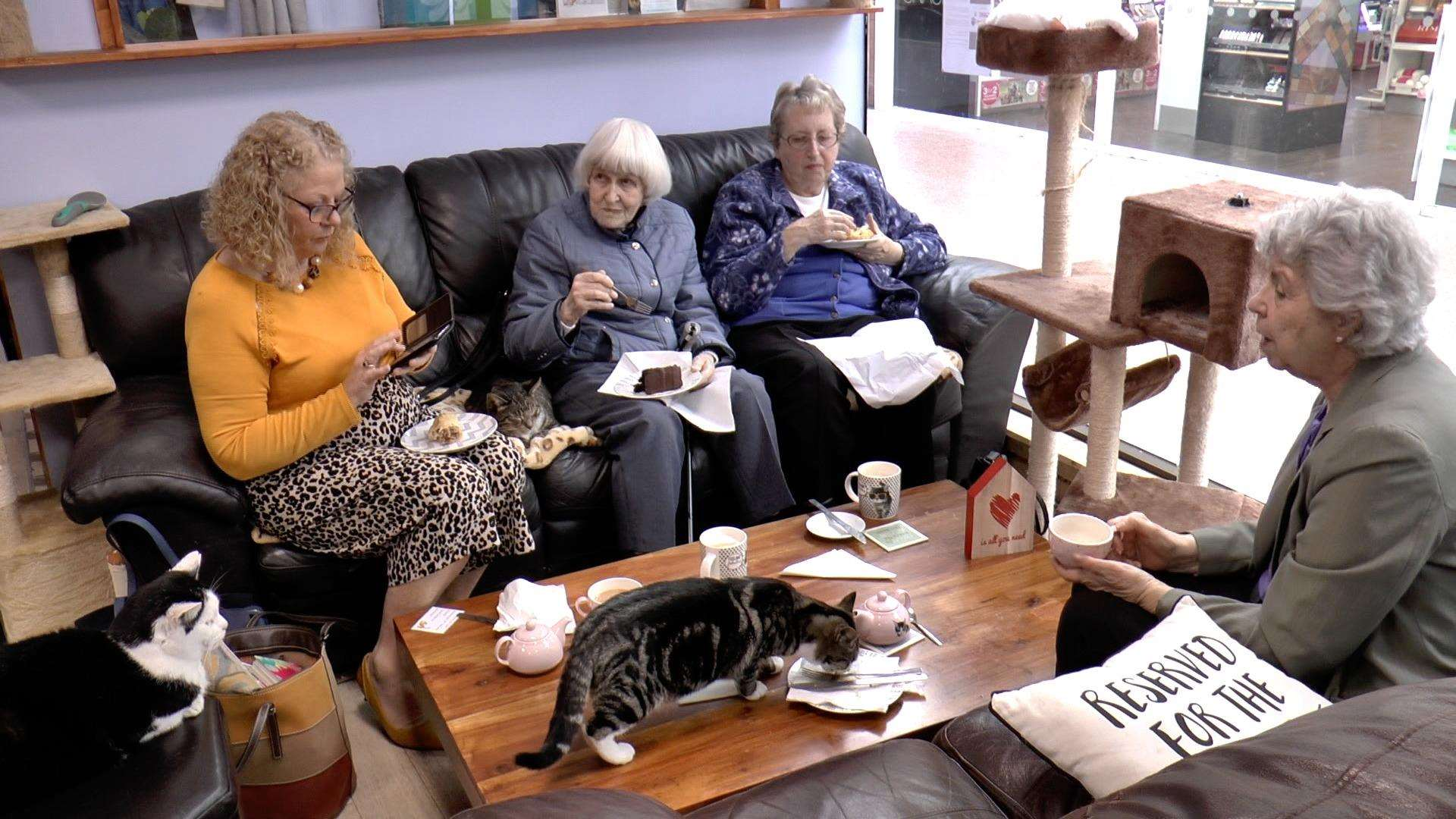 Pensioners with West Kent Befriending Service headed to Paws Cat Cafe on Thursday(7511648)
