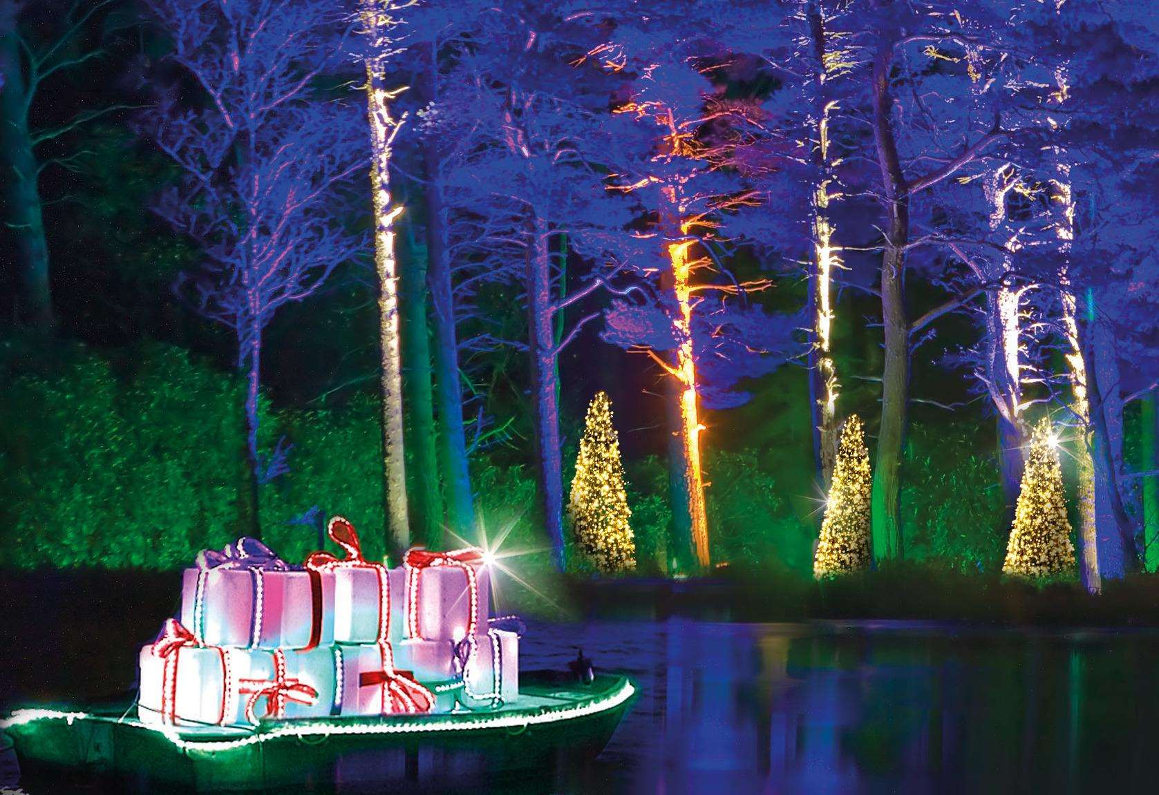 Christmas At Bedgebury Will Be A Forest Of Festive Lights