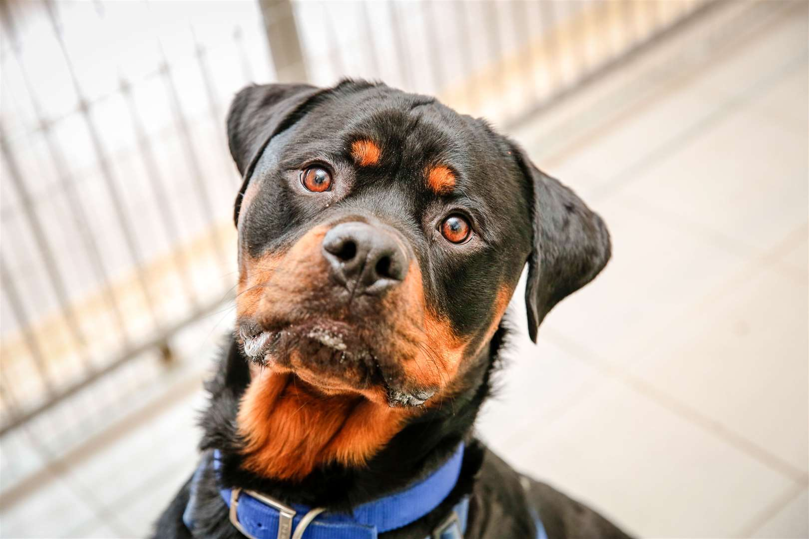 A rottweiler - such a dog is believed to have sparked the action. Stock picture