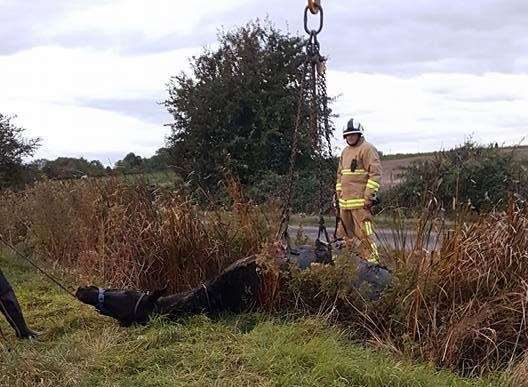 Firefighters used a crane to pull Gabby out after two hours of being stuck in the ditch