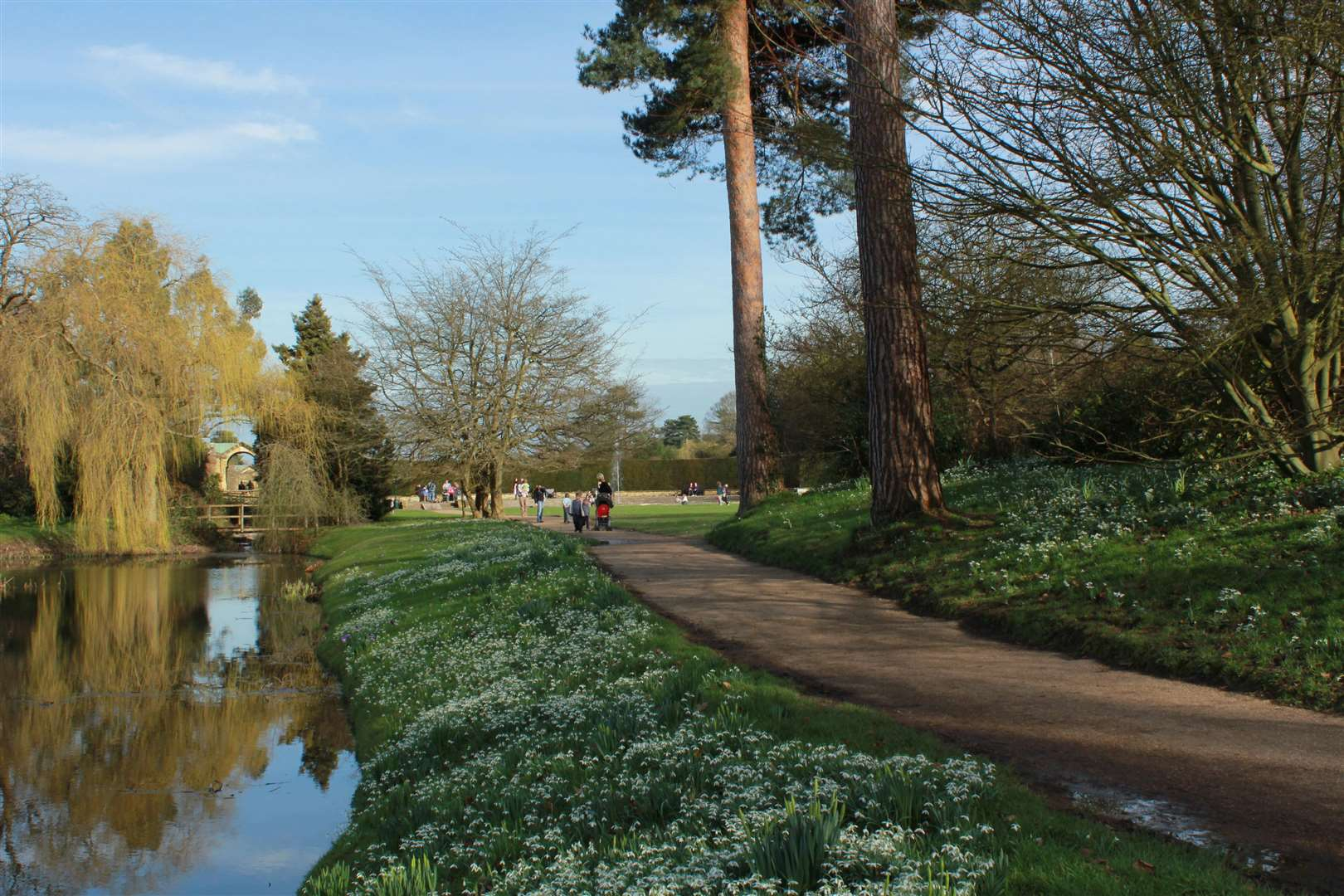 Snowdrops at Hever Castle (7318303)