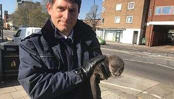 Only RSPCA inspectors will take in animals now