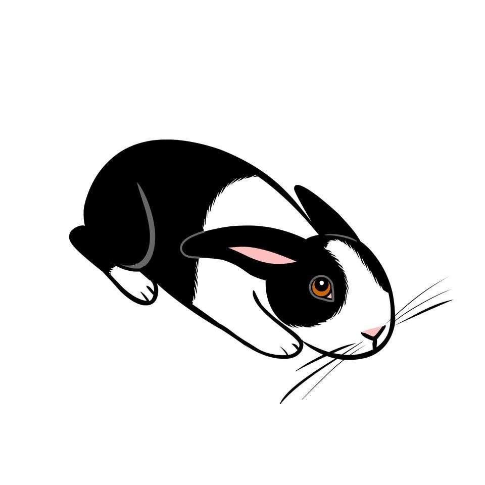 A scared rabbit: Photo: Lili Chin