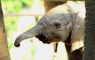 A baby elephant was born at Howletts in September